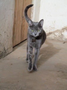 Nulty practices her catwalk moves in the courtyard.