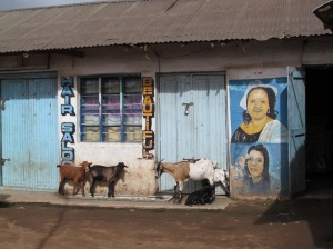 Some mbuzi hanging out in front of the local hair salon.  The streets of Ilembo are littered with mbuzi - they are everywhere.  Alas, they seem determined not to let me pet them, despite my many attempts.