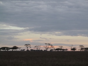 SunsetSerengeti